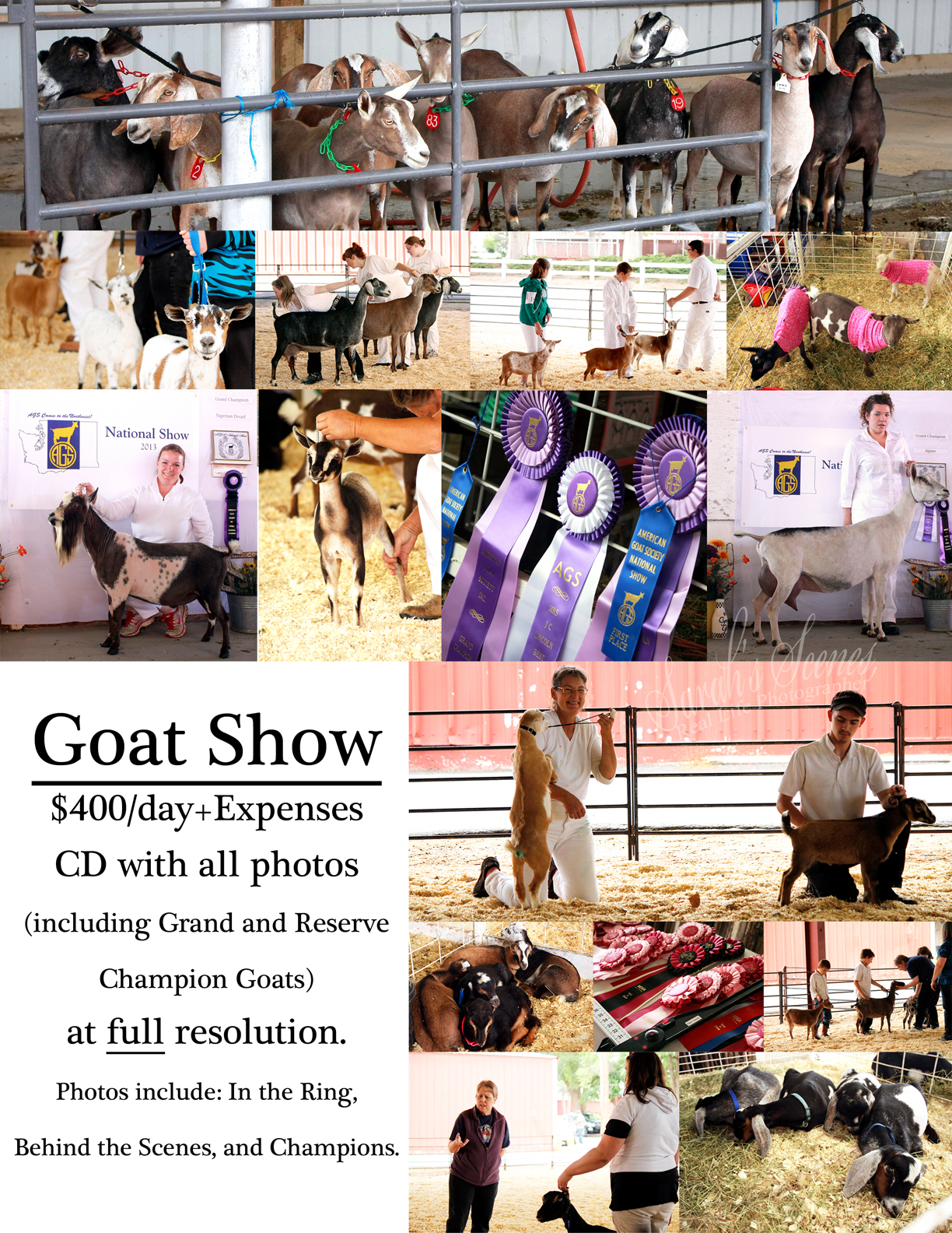 Goat Shows